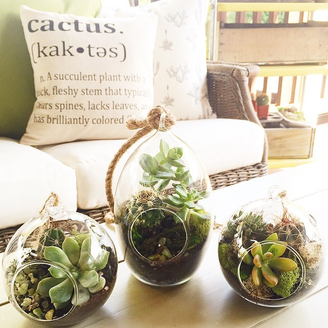 Today's #ladieslunch included DIY terrarium making. I can't wait to hang mine up!! (Cactus pillows by @sovintagechic ???)