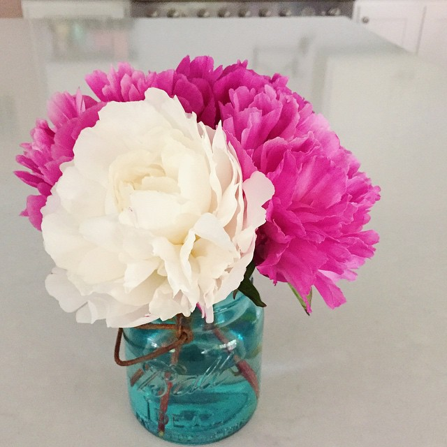 So exciting to cut these from my own peony garden! #kellerfarmhouse