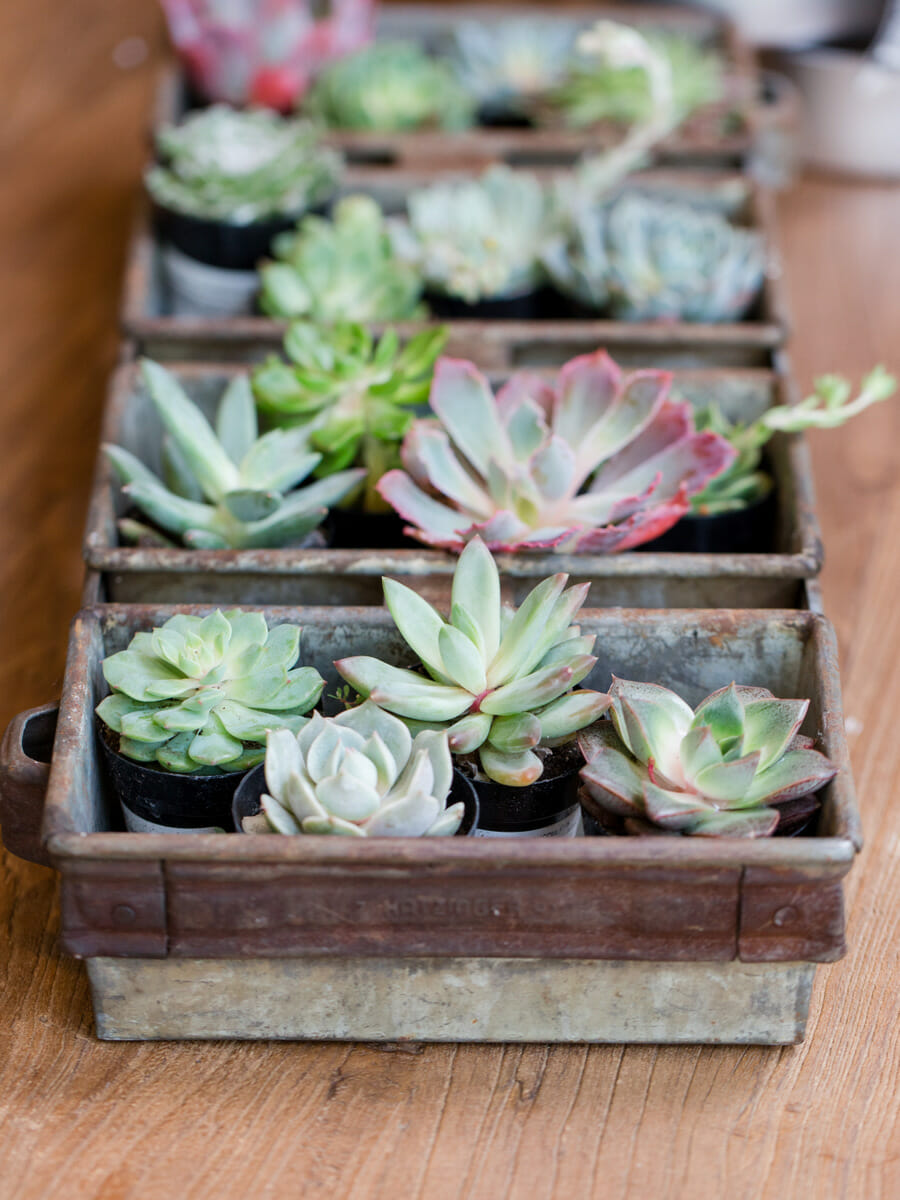 How To Host A Succulent Garden Party | Summer Party Ideas | Garden Party  Decor |
