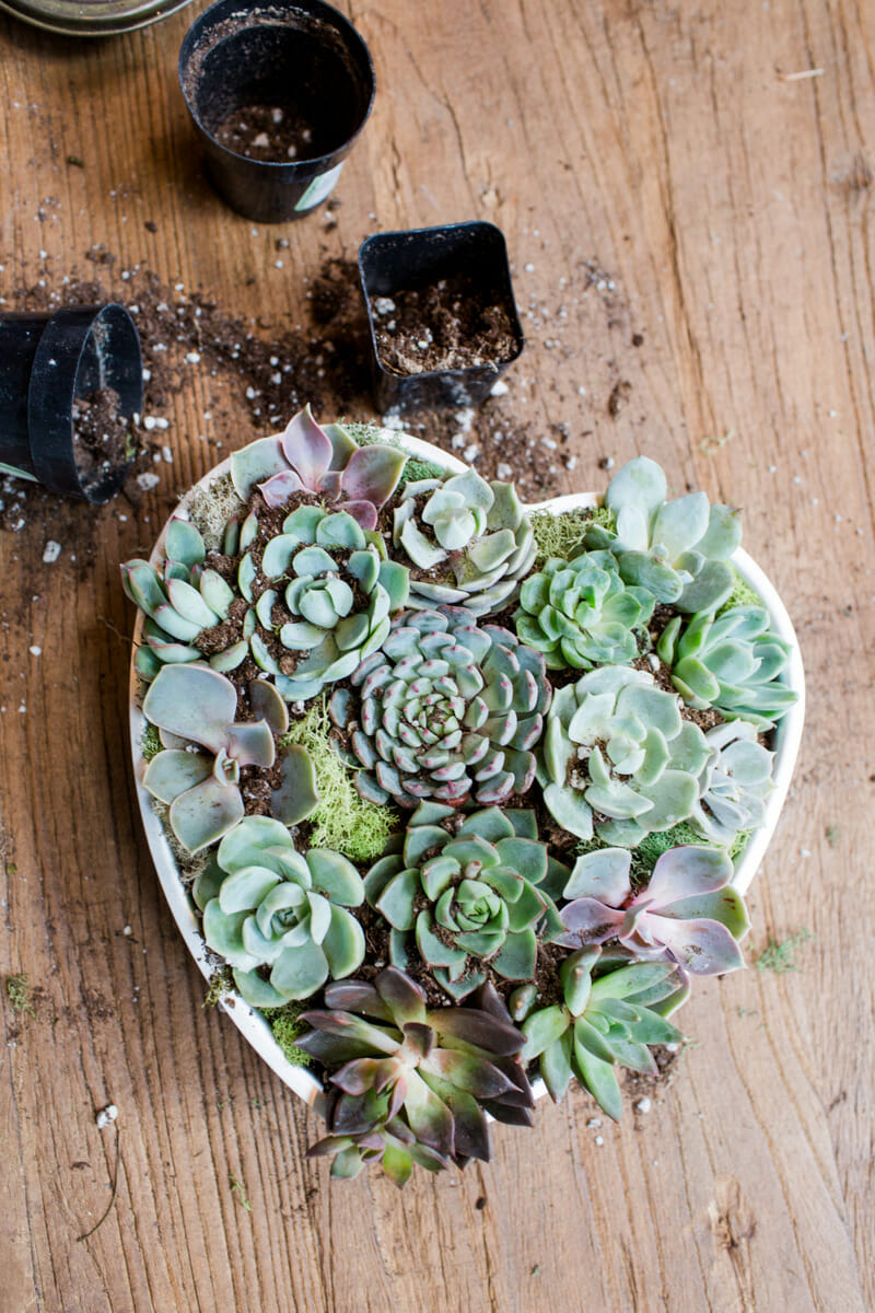 How to Host a Succulent Garden Party | summer party ideas | garden party decor | garden party ideas | summer party decor || JennyCookies.com #parties #summerparty #gardenparty #succulents